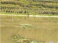 需要野生河水魚的聯系我,價格便宜,絕對河魚,18275055385需要釣魚的也可以聯系,此廣告長期有...