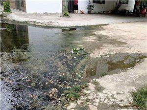 排水沟堵塞,一个多月,无人处理。