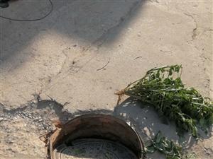 大常�f道路污水井�w破�p,存在安全�[患
