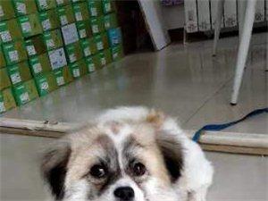 千元酬谢找狗狗
