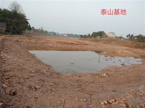 虾塘出售,由于发展需要现将泰山六十五亩精养池出售。距离县城五公里,交通方便公路到池塘边,水源条件好不...