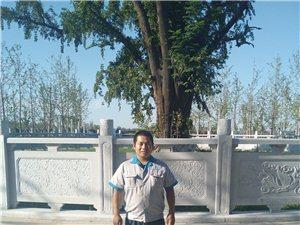 临泉县城西:千年神树!