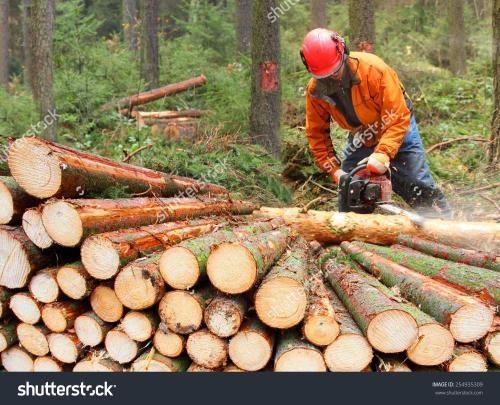專業伐木!收楊樹,榆樹,果木樹,有專業的伐木團隊,聯系電話15931476510(只限河北省保定地區...