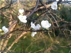 满园秋色杏花开