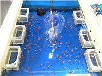 大型魚缸一個,9成新!有做游樂場所的朋友淘到千值萬值!