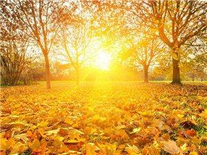 《秋�~》