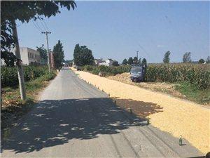 付集到于镇,苏木到于镇的路上玉米又开始了!
