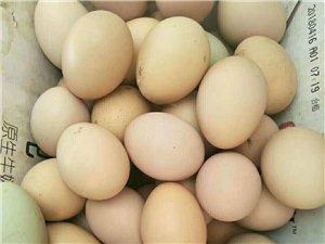 賣自己家的笨雞蛋