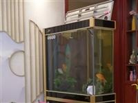 松宝隔断鱼缸。45*100*180 超白加厚玻璃。低价处理。有点小瑕疵,一扇柜门玻璃坏。