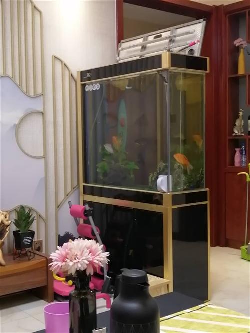 松寶隔斷魚缸。45*100*180 超白加厚玻璃。低價處理。有點小瑕疵,一扇柜門玻璃壞。