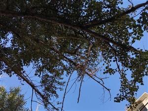 枯树枝摇摇欲坠