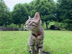 求赠小猫一只  限酒泉肃州区市区内