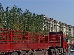 大货车在城区到底有没有禁行
