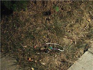 绿化带内电线裸露