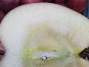 自产苹果,品种老红星,没有打拉长剂,另有黄元帅苹果