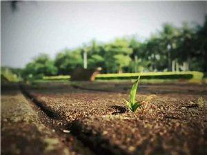 也许,有很多人都把小草当成是弱小、无能的象征,认为它们那矮小的身躯经不起一点儿风雨。但,我却不这么认