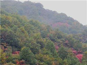 故乡的红叶