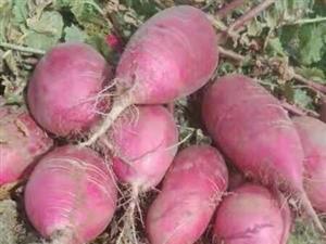 农家无肥料有机蔓菁
