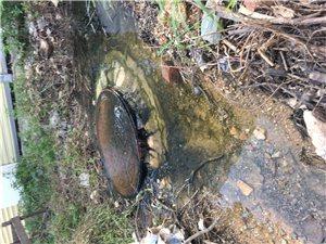 排污暗管堵塞,化粪池污水排放到315省道。