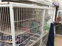 宠物笼子,可装猫狗,可拆卸,