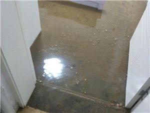 天成置业花半里住户一周二次反粪便水