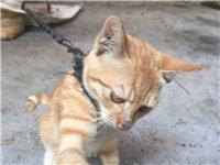 出售自家养的猫咪四只,有黑色有黄色两种颜色各两只,有想养猫咪的可以联系我!