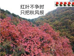 《石灰窑大峡谷》秋景独好