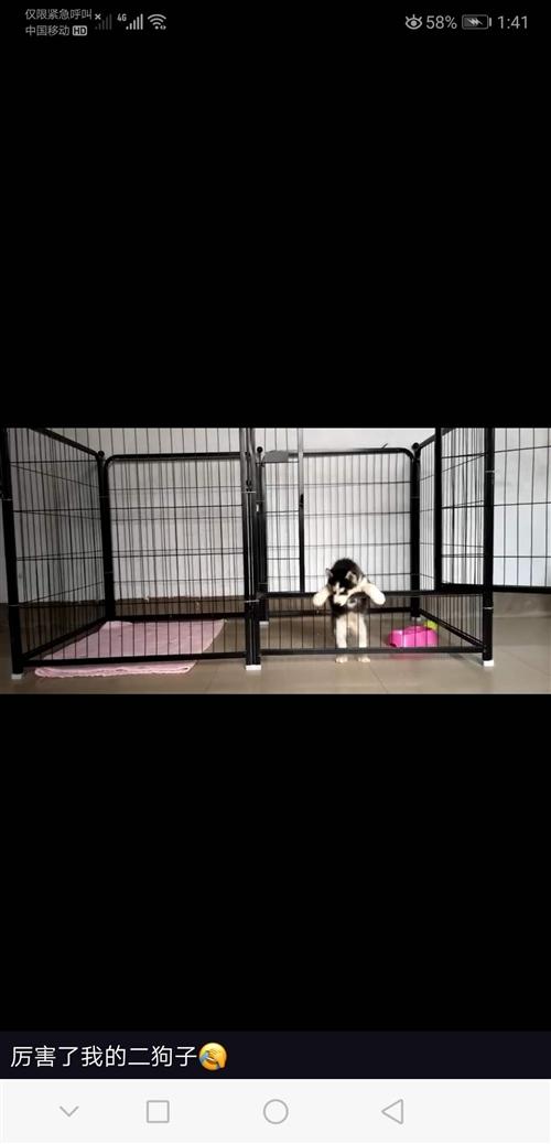 出售狗笼,一个一百,白笼底架有点坏,不碍事