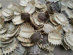 本人长年收购甲鱼壳(王八壳,鳖壳),一公斤15元