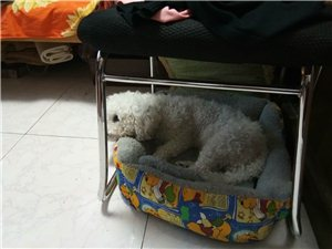�l家的狗狗�G了!!!