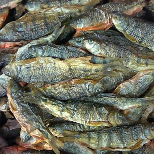 野生石斑魚干出售,數量不多