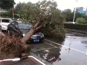 天灾无情,大树被大风连根拔起,砸中一辆车...