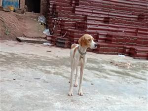 狗狗寻找主人