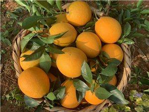 龍南茶頭崗臍橙
