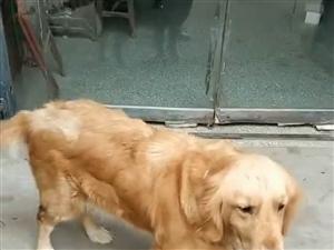 寻找狗??