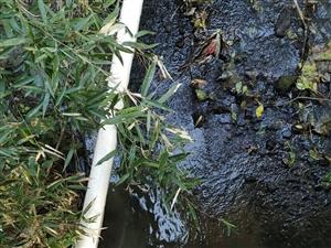 污染水利,�S沙新�A村老屋下,�B�i�舭沿i�S�i尿直接排到河里