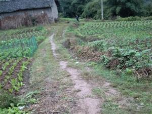 �l村的公路