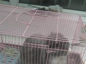 出售��物垂耳兔18903361011