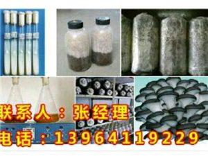 供��高�a平菇菌�N,���|棉籽��,提供技�g指��