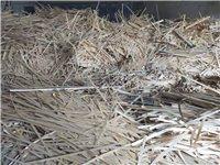 本公司大量出售木材刨花及边角废料木屑,有需求者可来电洽谈