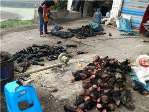 烧牛头和牛脚,污染环境楼上根本无法住人