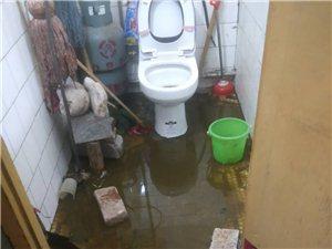 居民家里成了天然化粪池