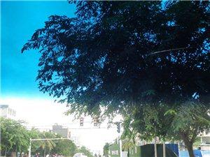 振兴南路与东兴居委会红绿灯信号灯被大树遮挡。