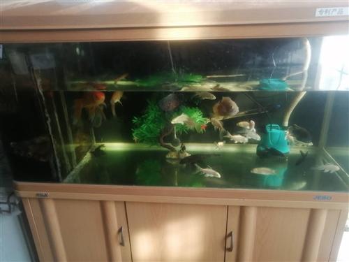 鱼缸一个1.2米 外带所有设备和五条热带鱼,两条地图,两条清道夫,一条皇冠