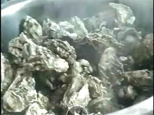 批发海鲜生蚝海蛎子