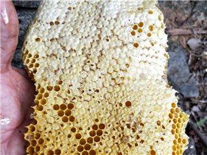 深山野生蜂蜜