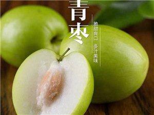 台湾大青枣,果型饱满,脆甜爽口,诚招各路批发商