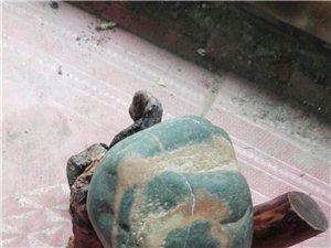 哪些年收藏的石头,大地书法之一一文字石一一大自然也是书法家。