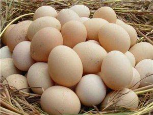 长期出售各种生态散养鸡