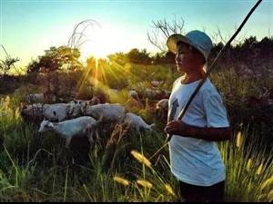 《回�L�b�b》一一牧羊人